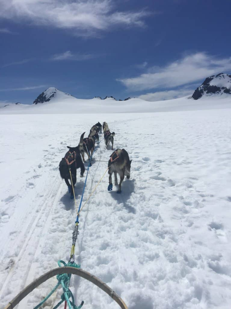 dogs running in slow tied to a sled