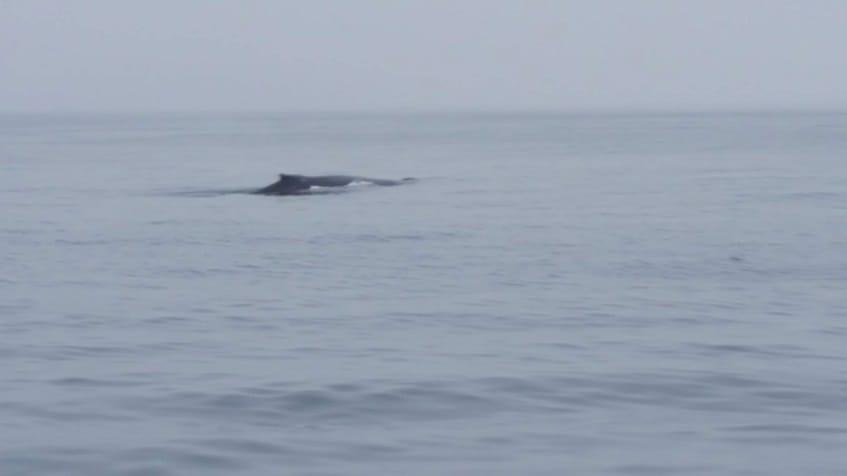 Watching whales in Seward, Alaska