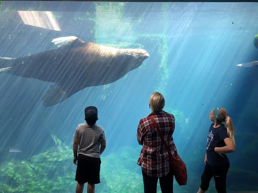 Visitors at Alaska Sealife Center